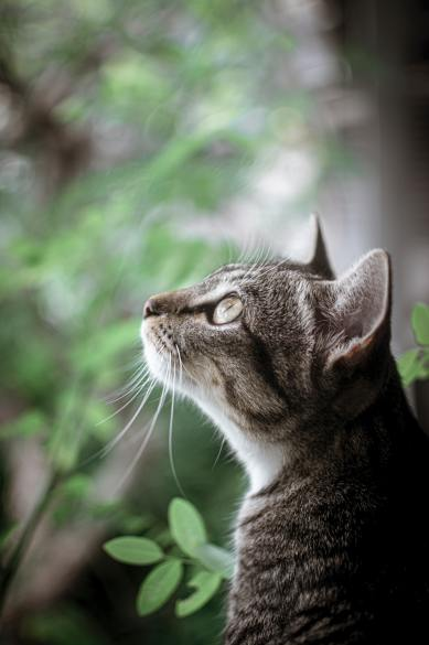 shallow-focus-photo-of-tabby-cat-looking-up-3226848